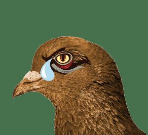 crying-eagle